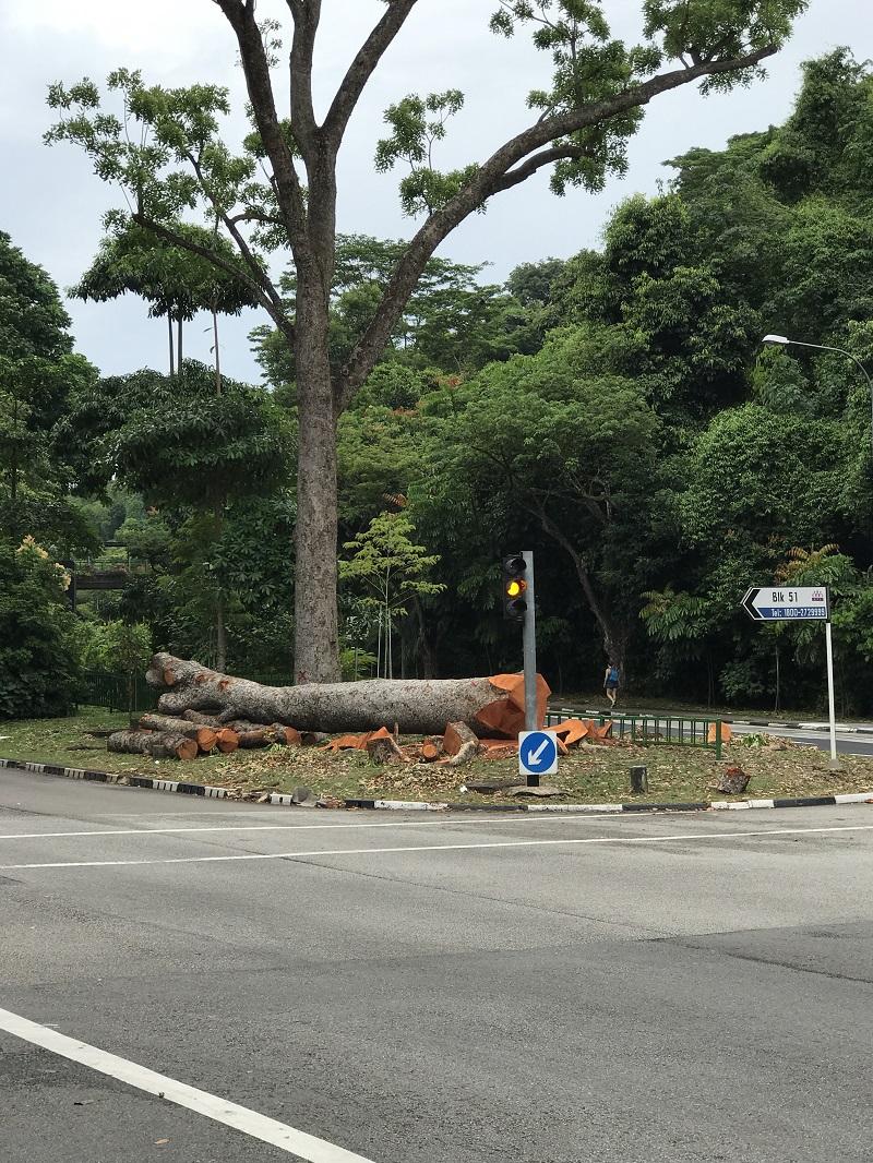 20171030-Henderson Road Tree.jpg