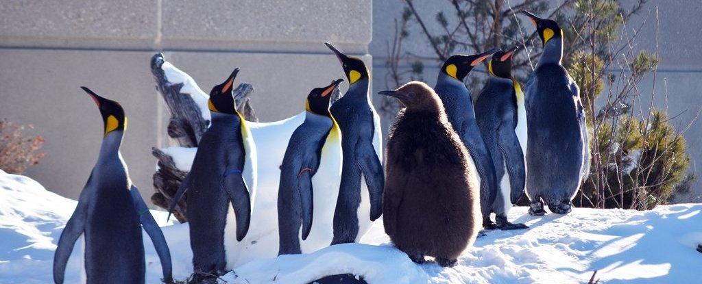 20180111_penguin.jpg